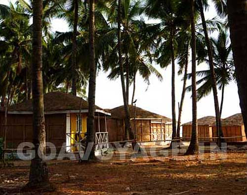 nice huts in a coconut grove in Agonda beach