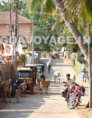 goa-beach-agonda-street-2