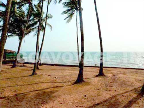 mud esplanade with coconut trees in anjuna north goa india