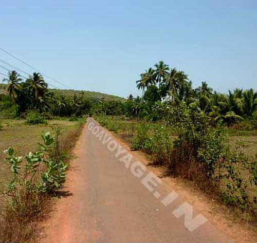 another road leading to the beach in Ashwem north goa india