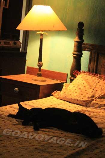 Chat noir dormant sur un lit