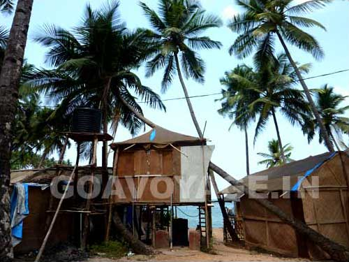 goa-beach-palolem-coconut-t