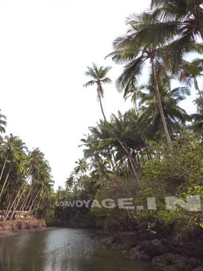 River in Canaguinim, South Goa, India